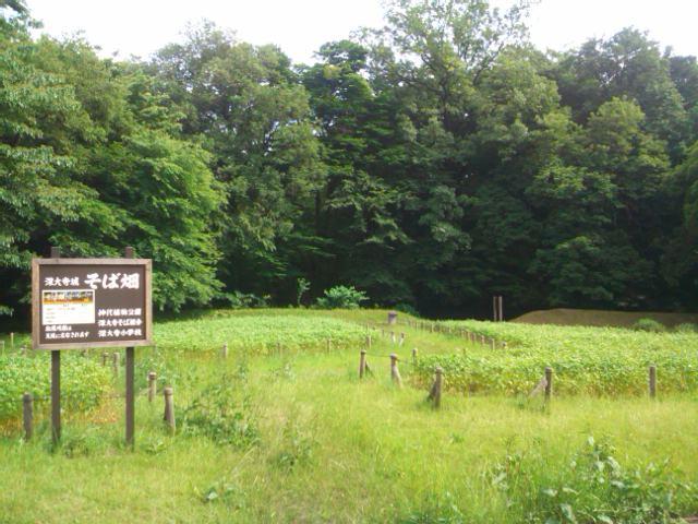 深大寺城跡のそば畑