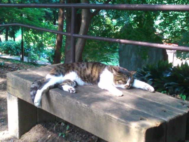 箱根山の猫